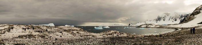 Panorama av den Cuverville ön med gentoopingvin i Antarktis Arkivbilder