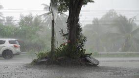 Panorama av den gröna djungeln under tropiskt regn Gröna djungelträd och palmträd, dimma och vändkretsregn T?m gunga stock video