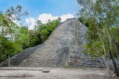 Panorama av den högsta Mayan pyramiden av det arkeologiska området av Coba arkivfoto