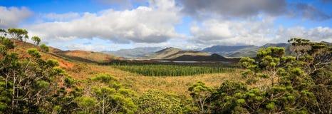 Panorama av den provinsiella blåa floden parkerar, söder av stora Terre, Nya Kaledonien arkivfoton