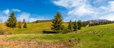 Panorama av den prydliga skogen på gräs- kullar Arkivfoton
