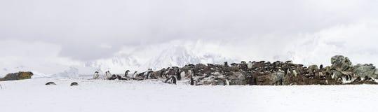 Panorama av den Ronge ön, Antarktis Arkivbild