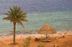 Panorama av den tropiska stranden med deckchairs och palmträdet Royaltyfri Bild