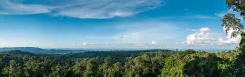 Panorama av den vintergröna skogen med blå himmel Fotografering för Bildbyråer