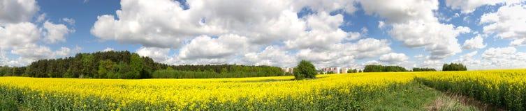 Panorama av det gröna sommarfältet Arkivfoton