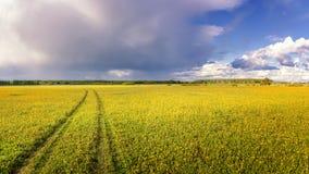 Panorama av det lantliga fältet i sommar med gulingblommor och vägen, Ryssland Royaltyfria Bilder