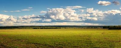 Panorama av det lantliga fältet i sommar med gulingblommor och vägen, Ryssland Royaltyfri Fotografi
