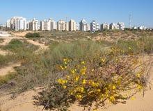 Panorama av det nya området av staden av Holon i Israel Sikt från sanddyerna arkivbild