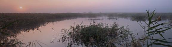 Panorama av en färgrik purpurfärgad gryning över sjön som är bevuxen med vasser royaltyfria foton