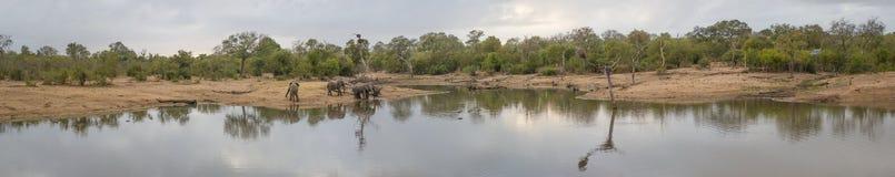 Panorama av en förminskas waterhole och en flock av elefanter royaltyfri fotografi