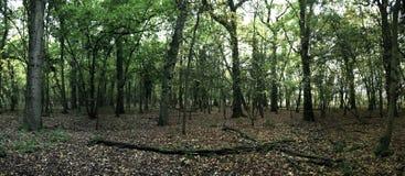 Panorama- av en skog i sommar royaltyfria foton
