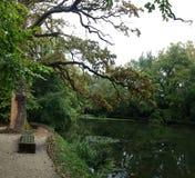 panorama av en skogsjö från en bänk på kusten Fotografering för Bildbyråer