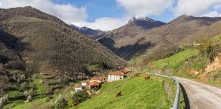 Panorama av en smal väg och kor i Picos de Europa arkivbild