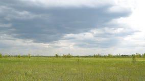 Panorama av en stor grön äng på en molnig dag stock video