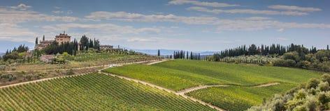 Panorama av en typisk Tuscan vingård Arkivfoto