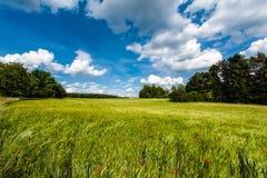Panorama av ett kornfält Arkivbilder