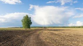 panorama av ett lantligt fält i sommar med björken, Ryssland Arkivfoton