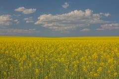 Panorama- av ett nyligen ankommet skördfält våren Nord av Spa arkivbilder