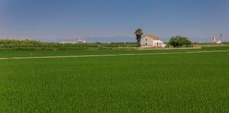 Panorama av ett vitt hus i risfälten av La Albufera royaltyfria foton