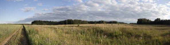 Panorama av fältet och skogen arkivbilder