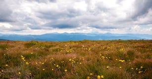 Panorama av gläntan av guling blommar mot bakgrunden av berg Bränt orange gräs på bakgrunden av berg Arkivbild