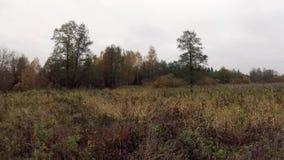 Panorama av höstskogen lager videofilmer