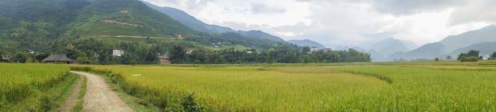 Panorama av skördsäsongen Arkivbilder