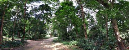 Panorama av skogen Arkivfoto