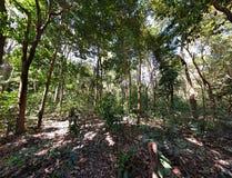 Panorama av skogen Royaltyfri Bild