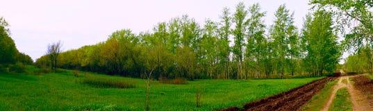 Panorama av skogen arkivbild