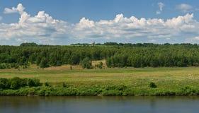Panorama av skogen Royaltyfri Foto