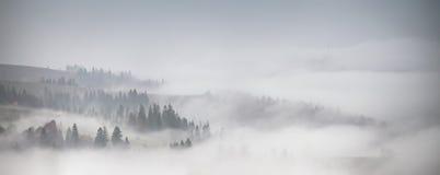 Panorama av skogen som täckas av låga moln Höstregn och dimma Arkivbild