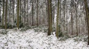 Panorama av träd i vinter av Polen Arkivfoton