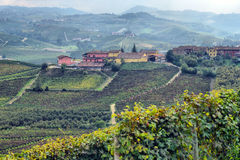 Panorama av vingårdar Arkivbilder
