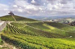 Panorama av vingårdar Arkivbild