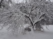 Panorama av vinternaturen efter snöfall royaltyfria bilder