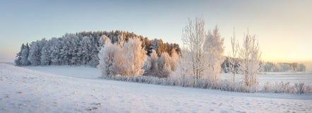 Panorama av vinternaturlandskapet Panoramautsikt på frostiga träd på snöig äng i morgon med varmt gult solljus royaltyfri fotografi