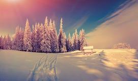 Panorama av vintersoluppgången i skogen Arkivfoton