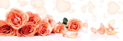 Panorama avec des roses et des coeurs Photo stock