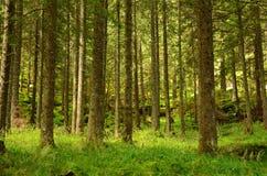 Panorama avec la forêt carpathienne en Roumanie image libre de droits