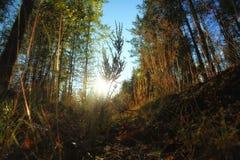 Panorama avec la forêt carpathienne en Roumanie Photographie stock