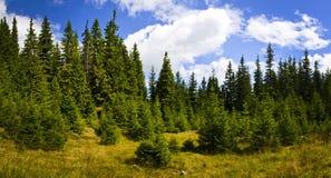 Panorama avec la forêt carpathienne en Roumanie Photo stock