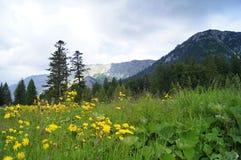Panorama azul de las montañas del verde amarillo Imágenes de archivo libres de regalías