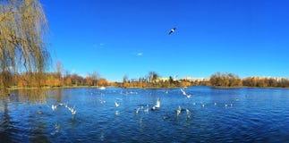 Panorama azul del lago de la ciudad Foto de archivo libre de regalías