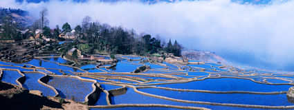 Panorama azul dos terraços do arroz do yuanyang imagem de stock