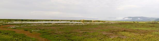 Panorama bagna Jeziorny Manyara, Tanzania Zdjęcia Stock