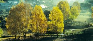 Panorama Baihaba, xinjiang, porcelaine d'arbre d'automne Photographie stock libre de droits