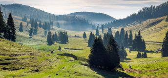 Panorama of Balileasa valley of Apuseni mountains. Gorgeous autumn sunrise with glowing fog among the spruce forest. Bihor mountain in the distance. beautiful stock image