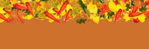 Panorama background with edge of autumn leaves Royalty Free Stock Photography
