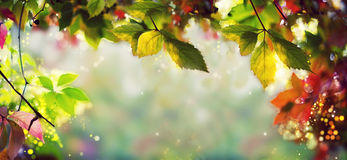 Panorama Banner / Background - Colorful autumn / fall leaves - Art work, Bokeh, Lens flares - Text, body, copy space stock photography
